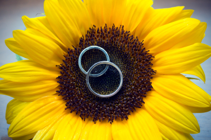 Wedding-rings-sunflower