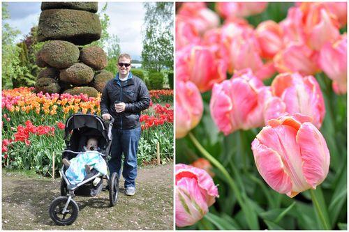 April 27 Tulips-002
