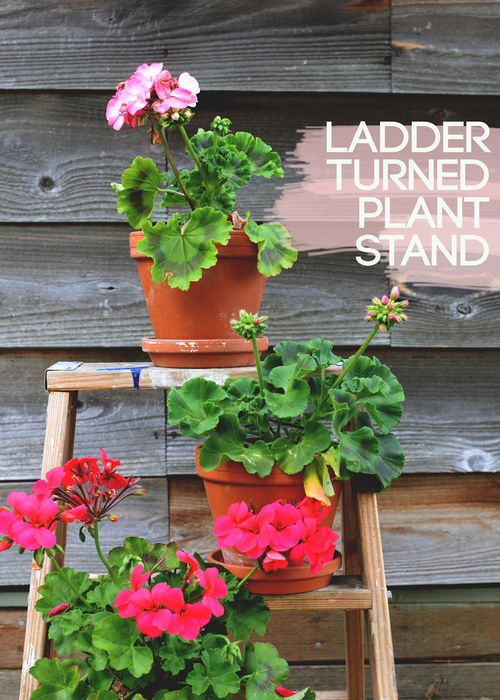 LADDER-TURNED-PLANT-STAND